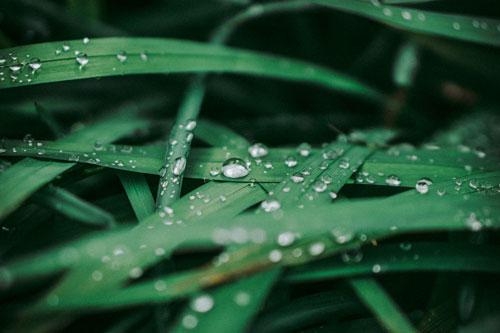 irrigated-grass-500-333px
